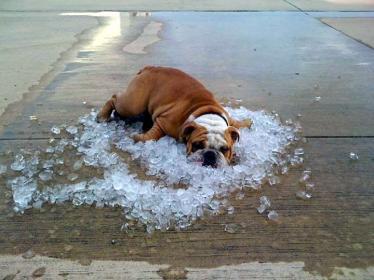 dog-on-ice