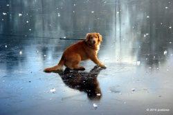 Dog_ice8